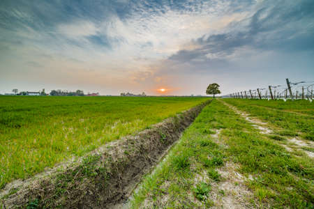 ditch: ditch pointing to a tree on the horizon in the countryside of Emilia Romagna in Italy Stock Photo