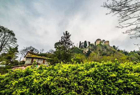 hedge: fortress above the green hedge