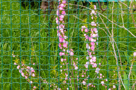 wire mesh: pink flowers behind a wire mesh