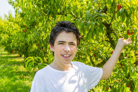 grasp: teenager next to rows of peach trees stretches out his hand to grasp a ripe peach Stock Photo