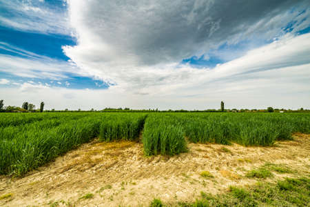 romagna: a stroll to the agriculture fields of Emilia Romagna