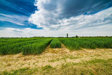 stroll: a stroll to the agriculture fields of Emilia Romagna