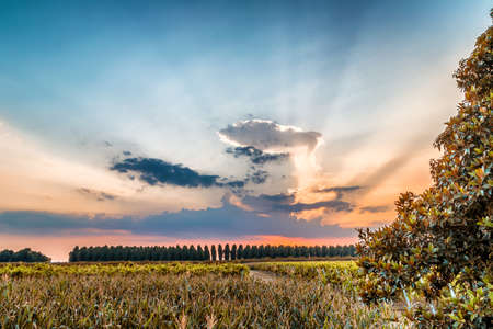 farmlands: Sunset on trees and green farmlands in Emilia Romagna in in Italy Stock Photo