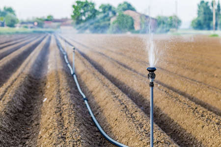 sprayer: irrigation of cultivated fields with rotating sprayer Stock Photo