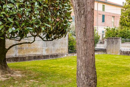 catalpa: garden with magnolia tree, catalpa tree and green grass Stock Photo