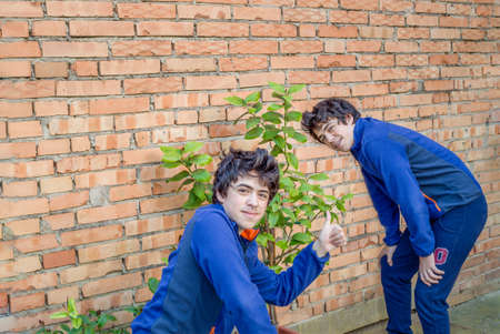 repeated: two boys dabble in gardening near a lemon tree, actually the same guy repeated Stock Photo