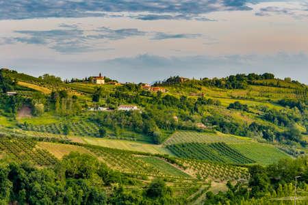de la relajante vista de los campos de olivos y árboles de durazno de la zona de montaña de Emilia Romagna en Italia
