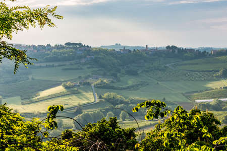 hilly: the relaxing view, thorugh green branches, of the fields of olive trees and peach trees of the hilly countryside of Emilia Romagna in Italy Stock Photo