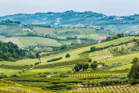 cultivated fields and rows of fruit trees in the hills of Emilia Romagna countryside