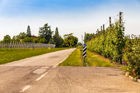 paved: paved country road in Italy