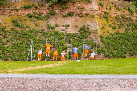 signaling: City workers in signaling clothing while collecting capers from climbing plants along the medieval walls of the town hall