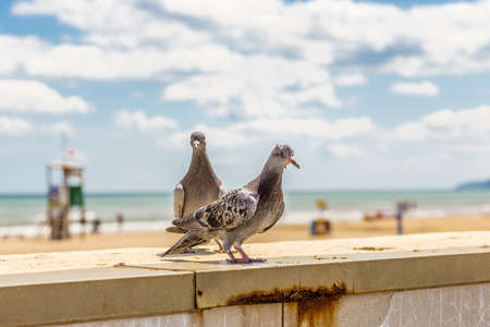 parapet: pigeons on a parapet in front of the beach