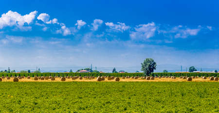 bucolic: round hay bales in a harvested field , rural and bucolic atmosphere of a hot summer day