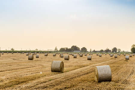 bales: field with hay bales Stock Photo