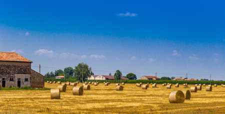 bucolic: round hay bales in a harvested field near a country farmhouse, rural and bucolic atmosphere of a hot summer day