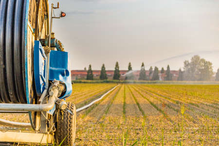irrigating: hose carries water to the sprayer watering and irrigating fields Stock Photo