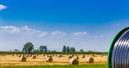 bucolic: round hay bales in a harvested field with irrigation pipes in the foreground, rural and bucolic atmosphere of a hot summer day