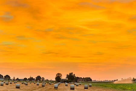 bucolic: Blue hour of sunset on round hay bales in a harvested field , rural and bucolic atmosphere of a hot summer day Stock Photo
