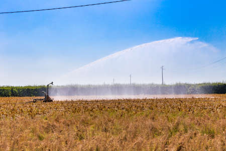 flaked: High pressure spray from an irrigation nozzle watering dry and flaked crops