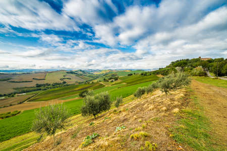 rural view of cultivated fields in Italian countryside