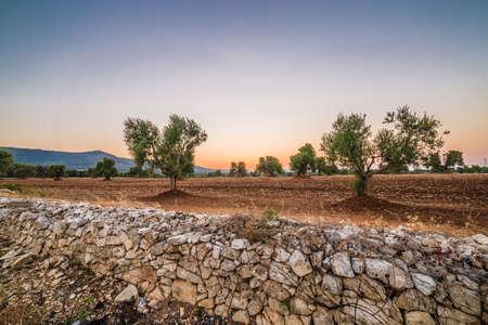 red soil of Apulian olive groves