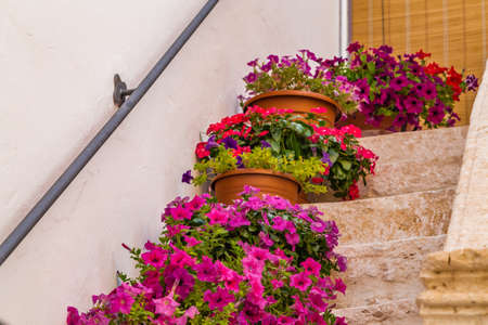 scenical: pots of flowers on the steps of a staircase