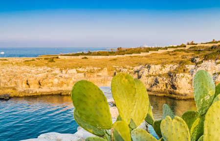 cactus paddles in polignano coast in Puglia in Italy
