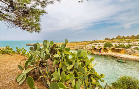 paddles: Puglia, Italy, cactus on the coast near Polignano