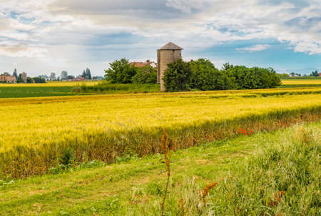 cultivated: cultivated fields in Italian countryside