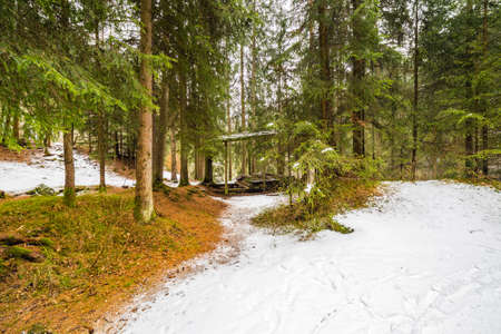 snowcovered: mountain view of snow-covered forest of pine and fir trees