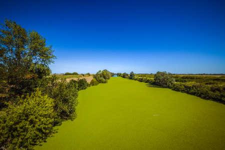 이탈리아 시골에서 화창한 여름 하루에 강 표면에 특이 한 녹색 조류 꽃 스톡 콘텐츠