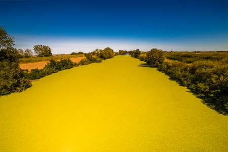 reno: unusual green algae bloom on river surface in a sunny summer day in Italian countryside Stock Photo