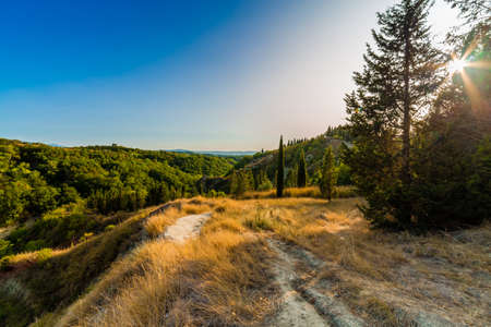 ochre: green trees and yellow weeds on country landscape of Senese Clays, region of badlands under the sun of Tuscany in Italy Stock Photo