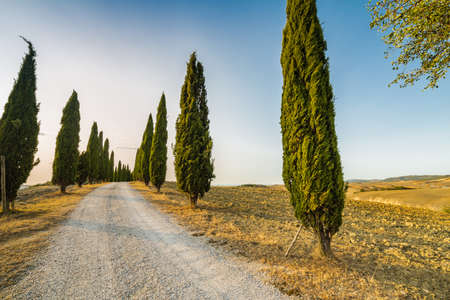 arando: dirt road running through rows of green cypresses in clay landscape