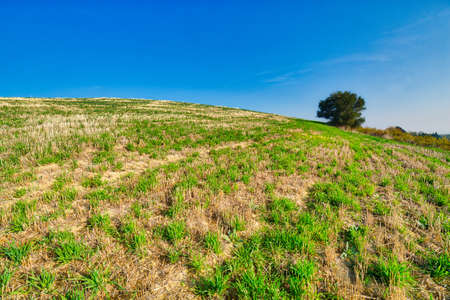 green rolling hills in Italian countryside Stock Photo