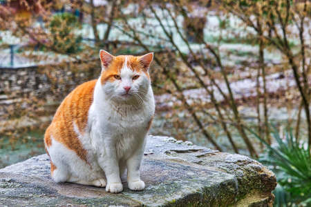 red and white fur cat sitting on frosty bridge in a cold winter day Stock Photo