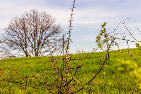 Thorny branches on green nature background
