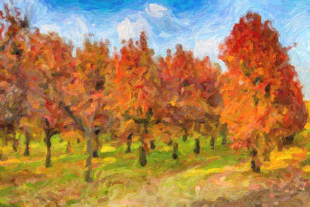 illusion of red, yellow and orange of a cultivation of persimmon trees planted in regular rows.