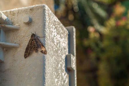 Moth on prefabricated fiberglass
