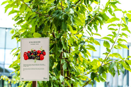 BOLOGNA, ITALY - OCTOBER 2, 2018: lights are enlightening Cherry tree Signboard in the garden at FICO EATALY WORLD, the largest agri-food park in the world