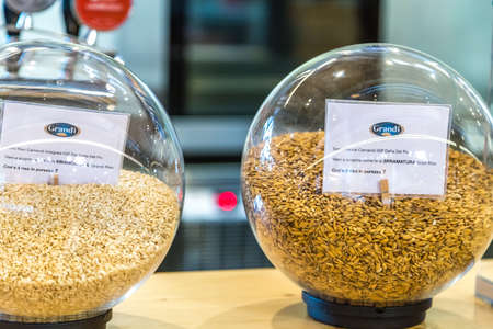 BOLOGNA, ITALY - OCTOBER 2, 2018: lights are enlightening rice bowls at FICO EATALY WORLD, the largest agri-food park in the world