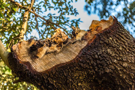 woodworm holes in cut trunk