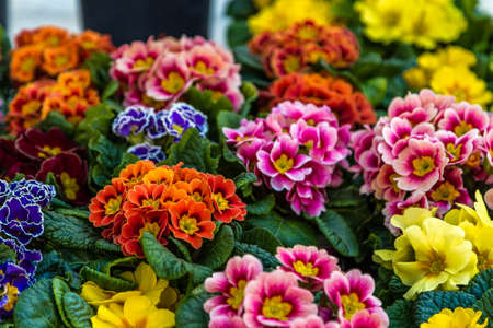 closeup of fresh colorful flowers Banco de Imagens