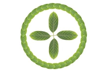 green fresh leaves frame Stock Photo - 14915678