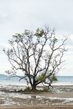 Dead and dry  trees caused by global warming. photo