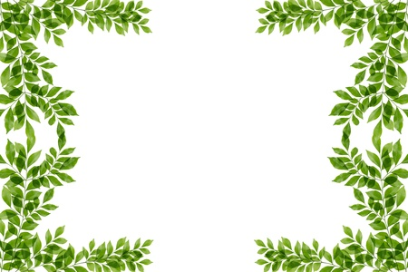green fresh leaves frame  Stock Photo - 14915831
