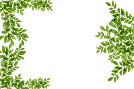 green fresh leaves frame Stock Photo - 14915810