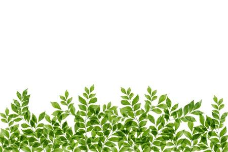 green fresh leaves frame Stock Photo - 14915778