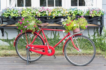 red bicycle white flower  photo