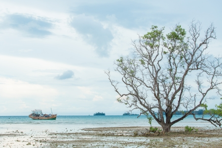 Dead tree and old sinking ship with sea view photo